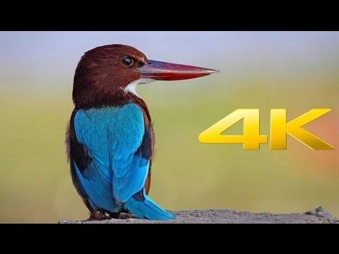 Panasonic Lumix 4K Video Test - Republican Entertainment